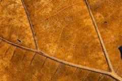 表面干燥棕色叶子纹理 库存照片