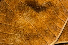 表面干燥棕色叶子纹理 库存图片