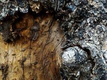 表面打破的树 免版税库存图片