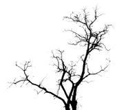表面无光泽的结构树 库存照片