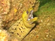 表面海鳗地点 免版税库存照片