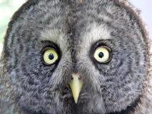表面猫头鹰 库存照片