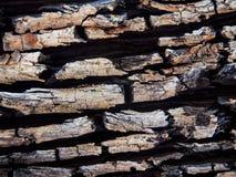 表面老木纹理 免版税图库摄影