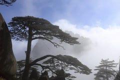 代表黄山,黄山的杉木问候客人代表中国的风景风景 免版税库存图片