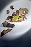 衰弱有绿色的叶子 免版税库存照片