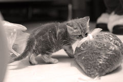 袋子宠物食品 库存图片