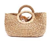 袋子小猫纺织品 图库摄影
