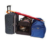袋子承运人宠物旅行 图库摄影