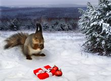 袋子看板卡圣诞节霜klaus ・圣诞老人天空 灰鼠看红色礼物盒和圣诞节球夜在森林 免版税库存图片