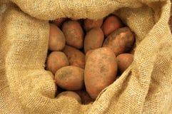 袋子粗麻布新近地开掘了土豆 免版税库存照片