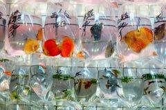 袋子金鱼待售在市场上 免版税库存照片