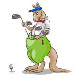 袋鼠和高尔夫球 库存图片