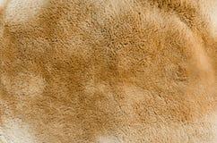 袋鼠毛皮纹理和背景 免版税库存图片