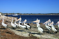 袋鼠海岛,澳大利亚 库存照片