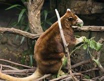袋鼠结构树 库存照片