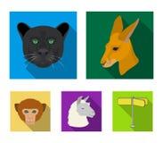 袋鼠,骆马,猴子,豹,现实动物设置了在平的样式传染媒介标志股票例证的汇集象 免版税库存照片