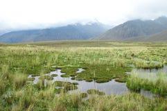 被上升的沼泽在中央秘鲁 免版税库存照片