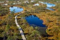 被上升的沼泽木板走道 Kemeri国家公园在拉脱维亚 免版税图库摄影