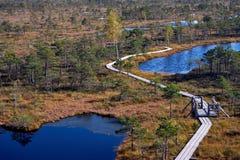 被上升的沼泽木板走道 Kemeri国家公园在拉脱维亚 库存照片