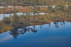 被上升的沼泽湖 Kemeri国家公园在拉脱维亚 图库摄影