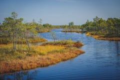 被上升的沼泽湖 Kemeri国家公园在拉脱维亚 库存照片