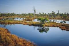 被上升的沼泽湖 Kemeri国家公园在拉脱维亚 免版税库存图片