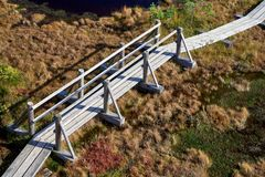 被上升的沼泽的木板走道 Kemeri国家公园在拉脱维亚 库存图片
