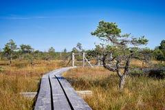 被上升的沼泽 木板走道在Kemeri国家公园 拉脱维亚 库存图片
