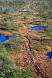 被上升的沼泽 Kemeri国家公园在拉脱维亚 免版税库存照片