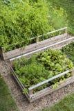 被上升的箱子的菜园 图库摄影
