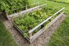 被上升的箱子的菜园 免版税库存图片