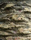 被乱写的老棕榈树吠声纹理,抽象背景 图库摄影