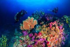 被享用的潜水在蓝色世界 图库摄影