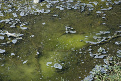 被传染的水 免版税库存图片