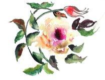 被传统化的花玫瑰 免版税库存照片