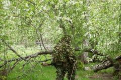 被伪装的狙击手在森林里 免版税库存图片
