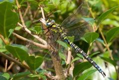 被伪装的蜻蜓井 库存图片