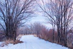 被侧的紫色路多雪的词根 免版税库存照片
