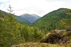 被保存的山森林风景 免版税图库摄影