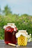 被保存的果子,欧洲酸樱桃蜜饯 免版税库存照片