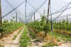 被保护的果树园 免版税库存照片