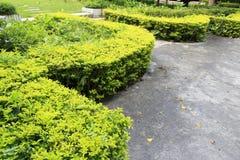 被修剪的灌木 免版税库存照片