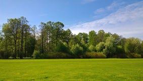 被修剪的草坪在有树的一个整洁的公园在背景中 免版税图库摄影
