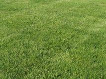 被修剪的草坪 免版税库存图片