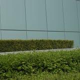 被修剪的绿色树篱 库存照片