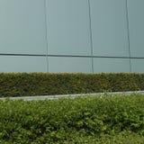 被修剪的绿色树篱 库存图片