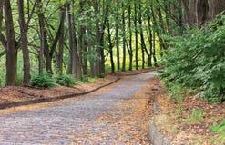 被修补的铺路石路进入距离在城市的夏天老公园 免版税库存图片