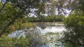 被修建的沼泽地,森密诺尔人佛罗里达 免版税图库摄影