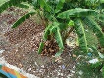 被倒空的椰子 免版税图库摄影