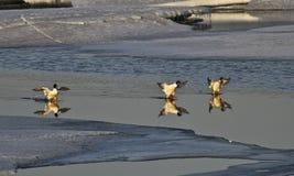 被倒置的反射在水中 免版税图库摄影